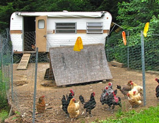 How to Turn a Camper into a Chicken Coop?