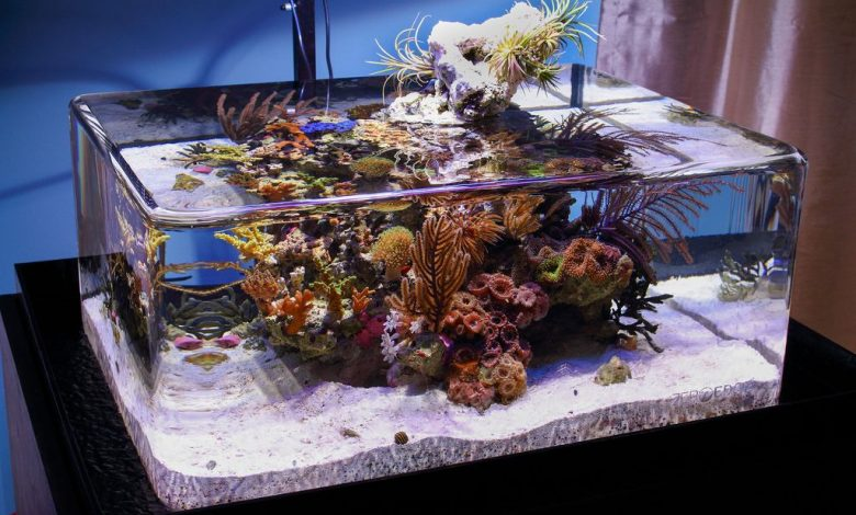 Can You Have a Fish Tank in an RV?