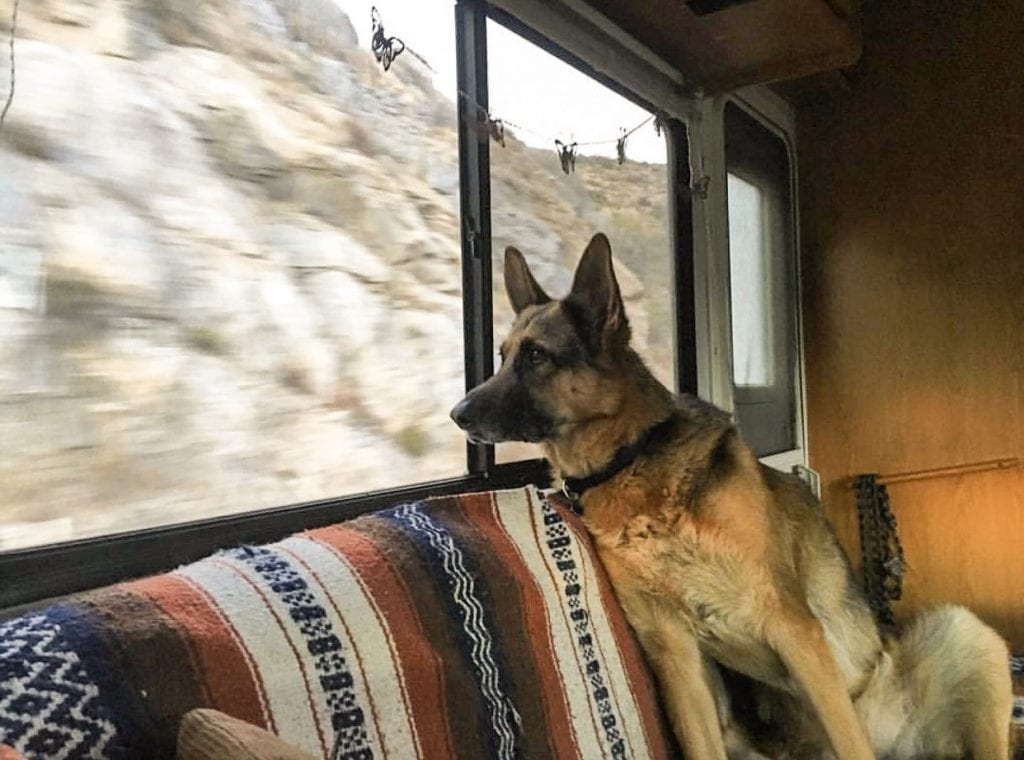 How to Make Your RV Pet Friendly?