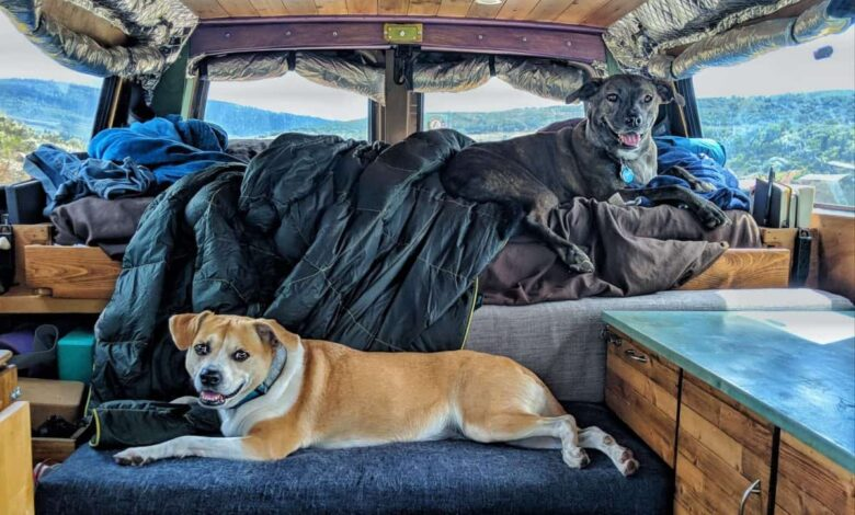 How to RV With Large Dogs?